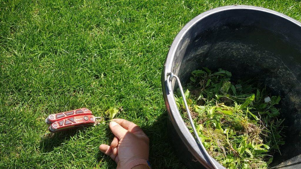 Hand weeding turf