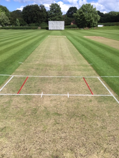 cricket wicket ready for play