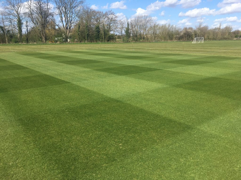 cricket square freshly cut