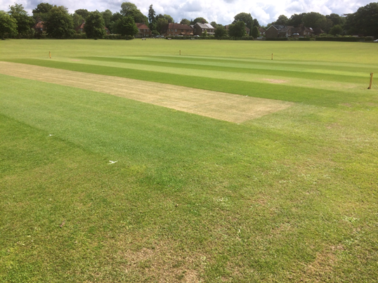 cricket square cut