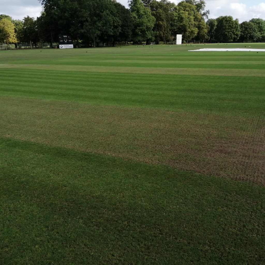 cricket square