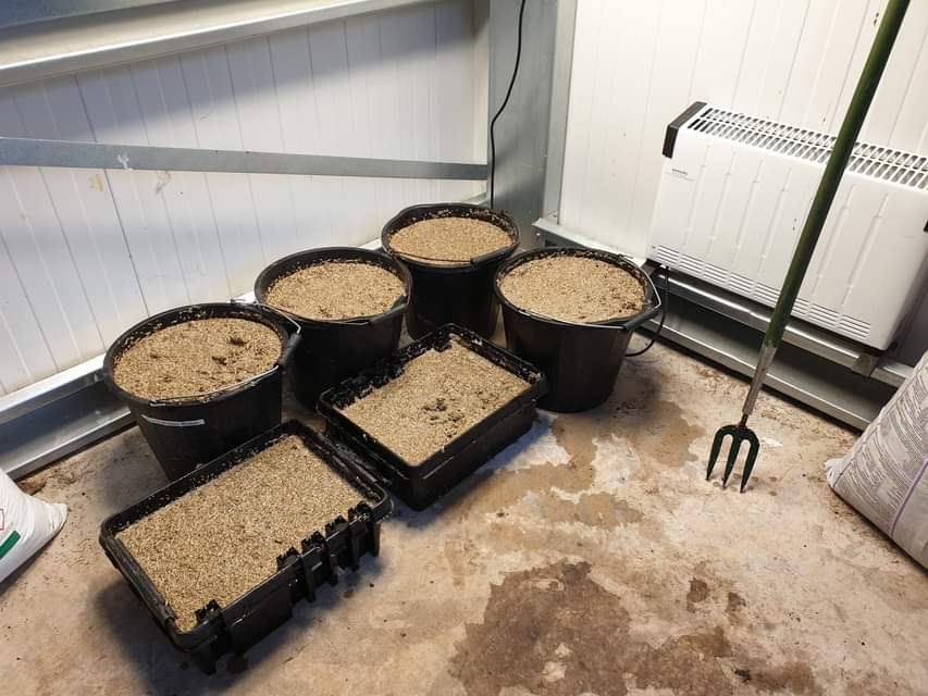 pre germinated seed
